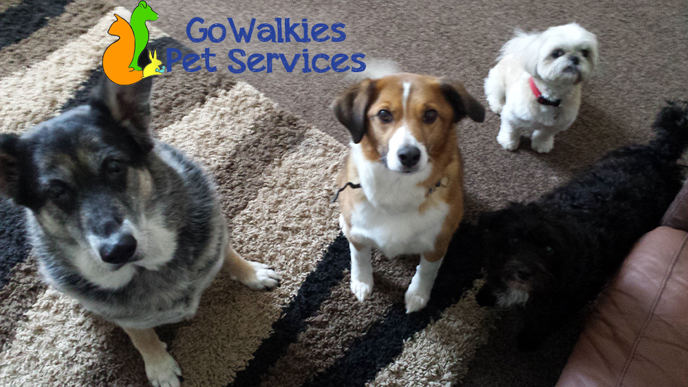 pet sitting in southport