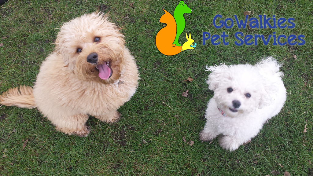 why choose go walkies pet services southport